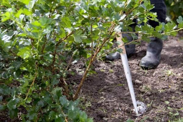 Обрезка, обработка плодовых деревьев в Сергиевом-Посаде | Прочие ... | 400x600