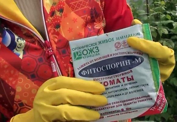 как обработать помидоры фитоспорином от фитофторы