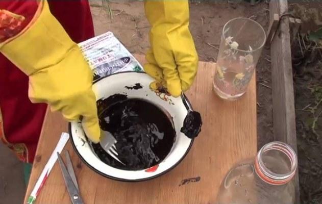 обработка томатов от фитофторы фитоспорином