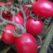 томат новичок розовый