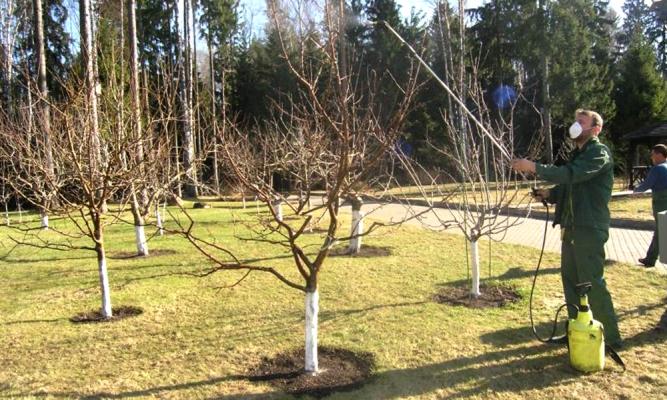 обработка груш осенью