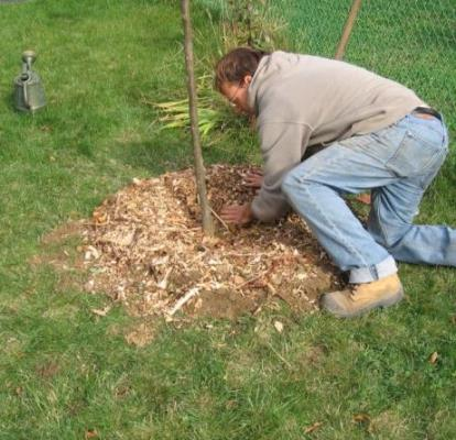 посадить грушу осенью в подмосковье