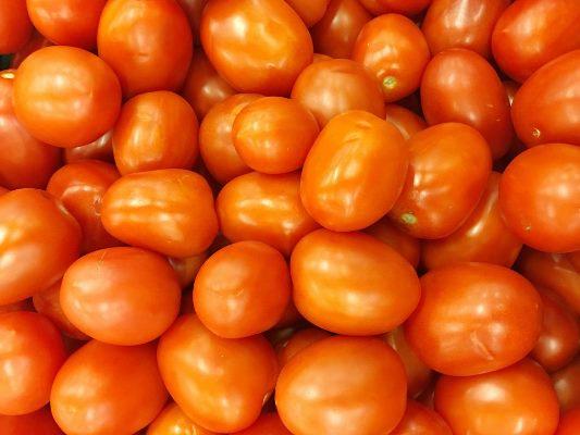 сорт помидор новичок