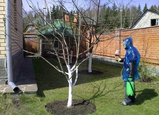 обработка груш осенью от вредителей