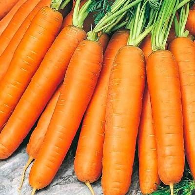 морковь берликум роял фото отзывы