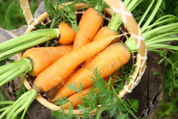 морковь карамелька описание сорта фото отзывы