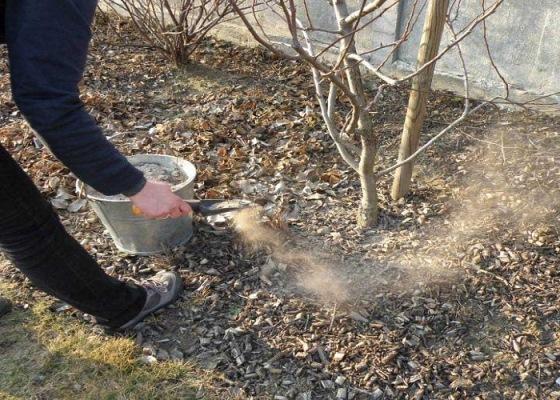 чем удобрять грушу осенью