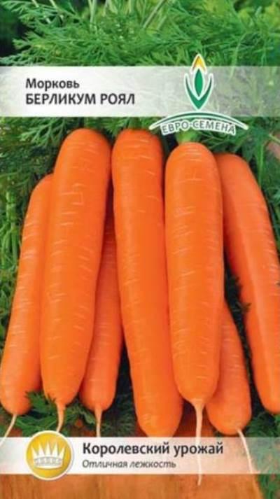 морковь берликум роял описание сорта фото отзывы