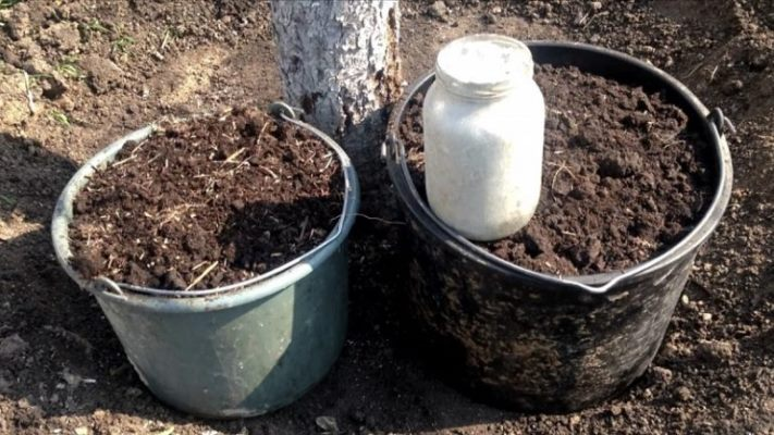 осенняя подкормка груши