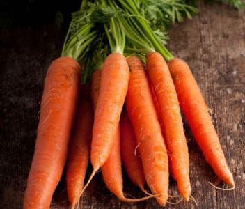 морковь лучшие сорта для сибири отзывы