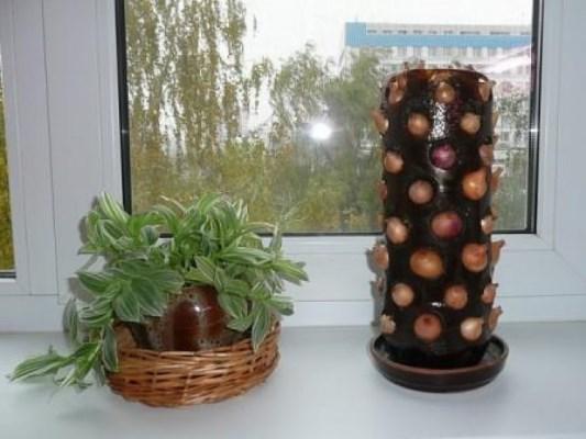 посадить лук в пластиковую бутылку