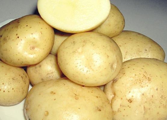 санте картофель характеристика