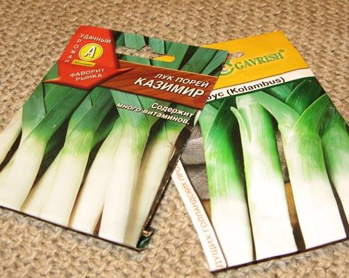 как выращивать лук порей в домашних условиях