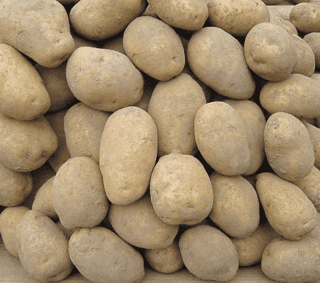 удача картофель характеристика