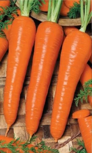 морковь семена лучшие сорта для сибири отзывы