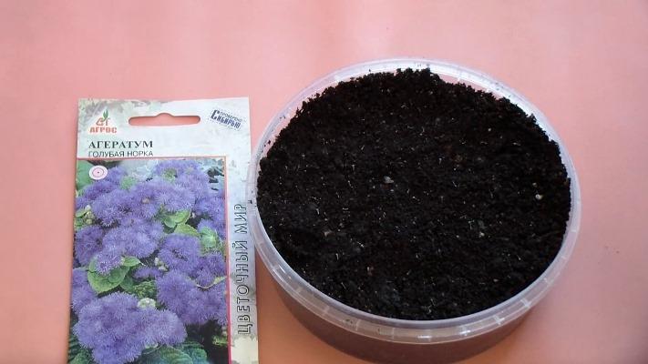 агератум мексиканский выращивание из семян когда сажать