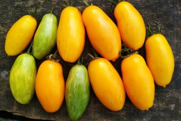 томат банановые ноги описание сорта отзывы