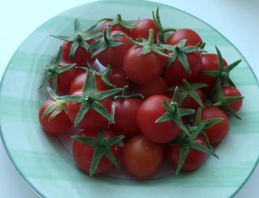 томат божья коровка отзывы фото кто сажал