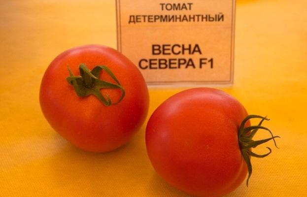 томат весна севера отзывы