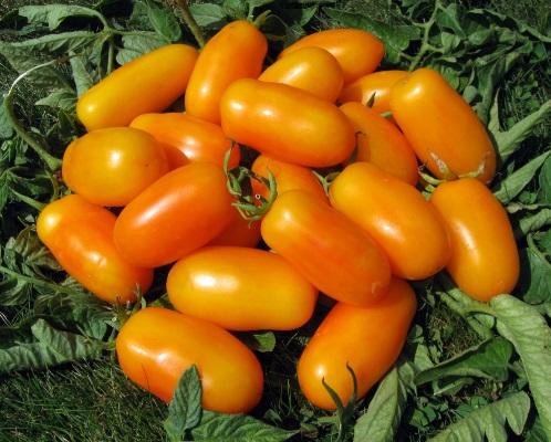 помидоры банановые ноги отзывы с фото