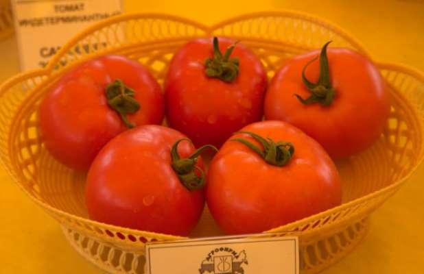 томат весна севера отзывы фото