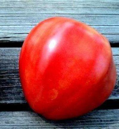 томат бычье сердце французское