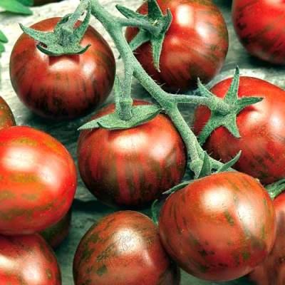 томат полосатый рейс отзывы фото урожайность