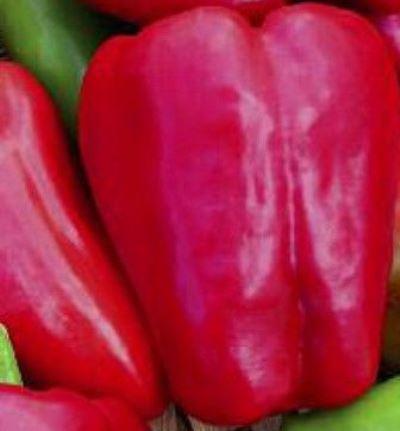 перец красные щечки уральский дачник