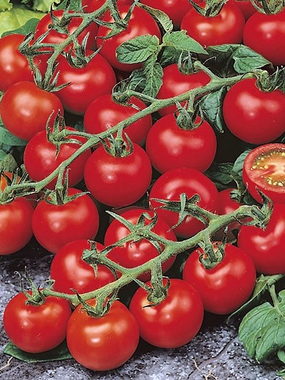Томат диковинка характеристика и описание сорта урожайность с фото