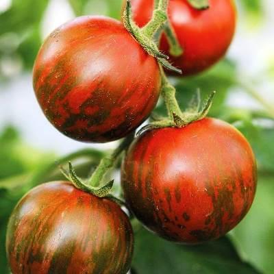 томат полосатый рейс характеристика и описание сорта