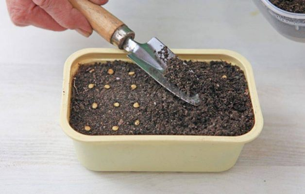 посев перца на рассаду 1