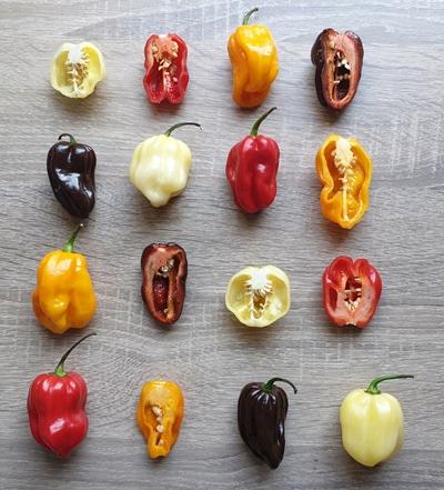 семена перца хабанеро