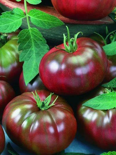 томат зефир в шоколаде характеристика