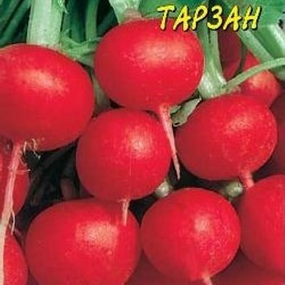 редис тарзан