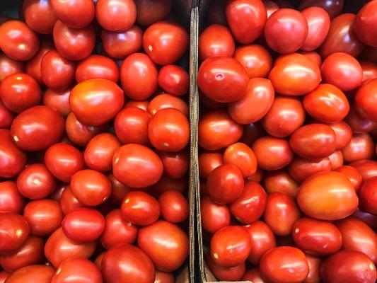 томат лариса характеристика