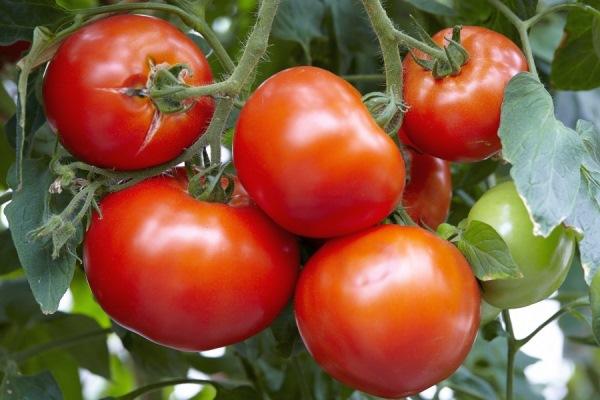 томат зефир