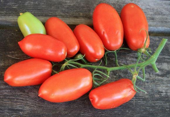 томат царское искушение отзывы фото урожайность