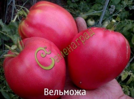 помидоры вельможа описание сорта фото отзывы