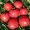 томат видимо невидимо описание сорта фото отзывы