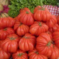 томат лотарингская красавица описание сорта фото отзывы