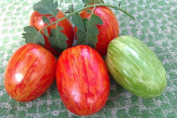 томат пасхальное яйцо описание сорта фото отзывы