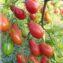 томат розовый снег характеристика и описание сорта