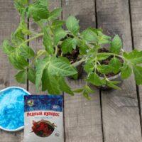 помидоры фитофтора медный купорос