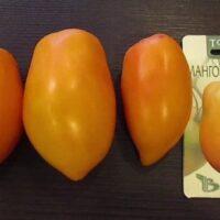 томат манго джанго