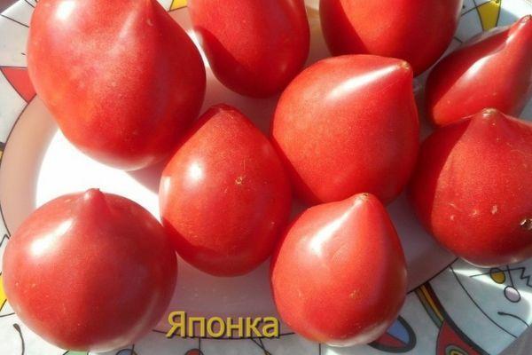 томат японка