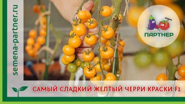 томат краски отзывы