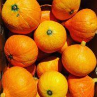 тыква оранжевое солнце