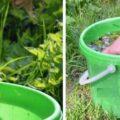 подкормка растений одуванчиками