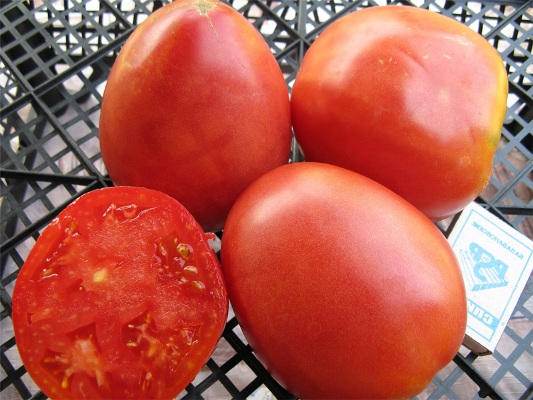 томат настенька