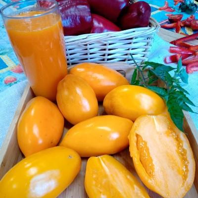 томат олеся